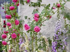 """""""Mi piace"""": 166, commenti: 9 - @flshowers su Instagram: """"今日は色んな事があってちょっと大変でした。 でも いつもありがとう。 涙が出るほど嬉しいでした。 本当にありがとう 優しくて思いやりを感じる。 #薔薇 #バラ #花 #写真t #rose…"""""""