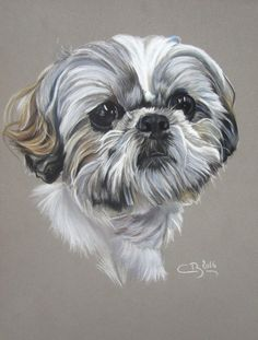 Energetic Shih Tzu Puppies Temperament Source by The post Energetic Shih Tzu Puppies Temperament appeared first on Daisy Dogs. Perro Shih Tzu, Shih Tzu Puppy, Shih Tzus, Creature Drawings, Animal Drawings, Dog Portraits, Pastel Portraits, Dog Paw Drawing, Lhasa Apso
