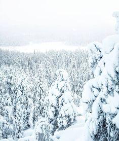 """769 Likes, 11 Comments - Petteri Karttunen (@petekarttunen) on Instagram: """"Merry christmas! """""""
