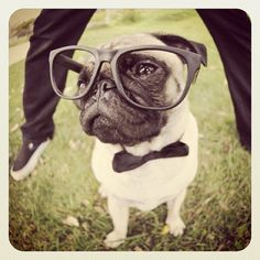 Hipster pug. Just so you guys know, this is happening one day. ha.