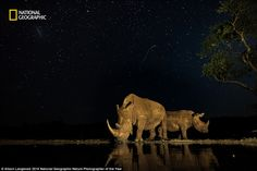 A pair of South African rhinos sip from a placid pool under a sky ablaze with…