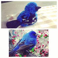Pompon bird