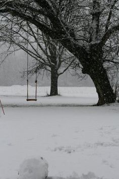 Tree swing in winter snow