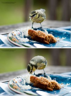 Small hungry bird.