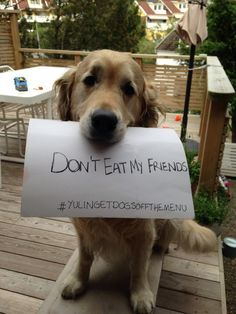 Dogs are not food. They are our best friends! pic.twitter.com/UTbcPoM2MH #YulinGetDogsOffTheMenu
