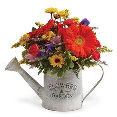 Aurora IL Spring Flowers - Schaefer Greenhouses, Montgomery Illinois