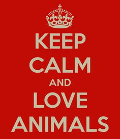 KEEP CALM AND LOVE ANIMALS!  #LOHVAL  #animalprotection  #alpolitics