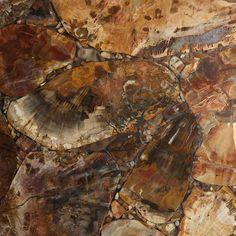 Polished European Red Petrified Wood
