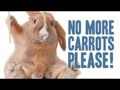 ▶ Animal Myths You Probably Thought Were True - YouTube