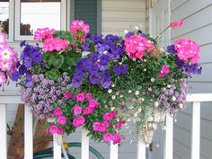 Wallish Greenhouses - Pink Geranium Window Box - Pink Seed Geraniums, Blue…