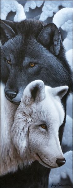 "kabrina kitty purrrssss ~ ♥ - ""The Wolf"" - Animals Wildlife Paintings, Wildlife Art, Animal Paintings, Animal Drawings, Horse Paintings, Pastel Paintings, Nature Paintings, Beautiful Wolves, Animals Beautiful"