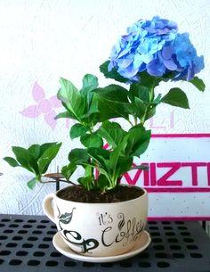 #MiMundoPerfectoEs empezar el día con una taza de café. Y que tal ésta con una Hortencia? #FelizLunes #Queretaro!