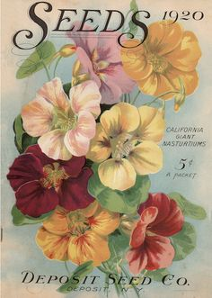 Deposit Seed Co 1920 vintage seed  catalogue with California nasturtiums