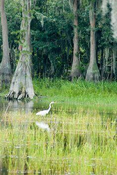 Lake Louisa - Clermont,Florida