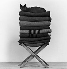 Black Cat and Black Blankets