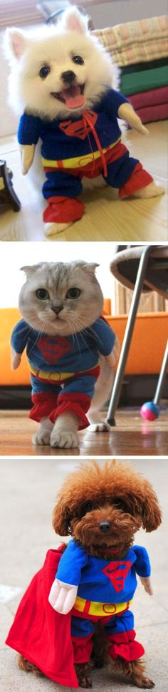Superman Pet Outfit | SO cUte! #superhero #dot #cat #pet
