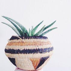 beautiful pot and aloe plant