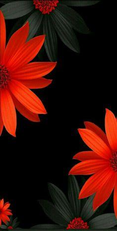 Flowers black background photography color splash 67 Ideas for 2019 Garden Wallpaper, Red Wallpaper, Colorful Wallpaper, Flower Wallpaper, Unique Wallpaper, Flower Backgrounds, Black Backgrounds, Wallpaper Backgrounds, Wallpaper Desktop