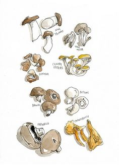 wendy macnaughton illustration of mushrooms Watercolor Food, Watercolor Illustration, Kitchen Artwork, Food Sketch, Poster Art, Food Painting, Food Drawing, Wall Drawing, Food Illustrations