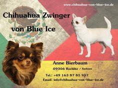 Chihuahua, Ice, Movies, Movie Posters, Films, Film Poster, Cinema, Ice Cream, Movie