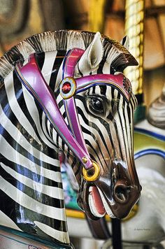 Carousel Zebra by Kenny Francis -- [REPINNED by All Creatures Gift Shop]  GORGEOUS!!!!!!!