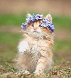 je suis Juliette; Où il est mon Roméo ????????