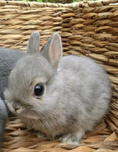 Mas conejitos bonitos♥