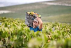 Do you really know what's in your wine? | Wine | The Guardian