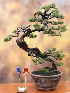 Mais [The flowing shape of this tree almost has a dragon look to it. It moves beyond a moyogi style to a bankan (twisted style) _ house of Warner] Plants, Tree, Bonsai Pots, Bonsai Tree, Bonzai Tree, Ikebana, Potted Trees, Japanese Garden, Trees To Plant