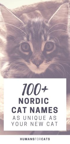 Struggling to find the perfect name for your new cat's personality? The Nords have a long history of loving cats, be inspired! Here are 100+ Nordic-inspired names that are as unique as your cat. // HumansForCats. A cat blog. Satisfy your Obsessive Cat Disorder @ humansforcats.wordpress.com