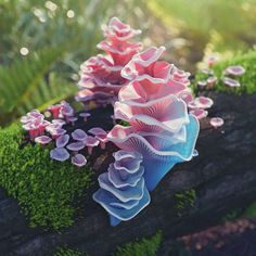 #pagoda #fungus #cinema #c4d #cinema4d #render #octanerender #photoshop #substance #daily #3d #graphics #graphic #design #abstract #art #surreal #organic #forest #realistic #mushrooms #moss #macro #bark #blue #pink