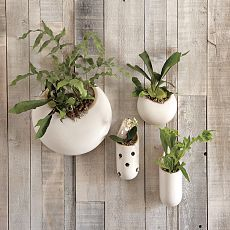 Organic ceramic forms create the perfect vessel for orchids or ferns. Consider this idea for wall-art in your bathroom.