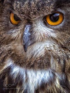 Owl face #PatrickBorgenMD