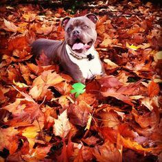 My goregous Billie Jean. She is my little model pup Xoxo