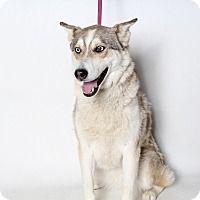 adopt a pet kennel 40 corona ca shelter corona animal