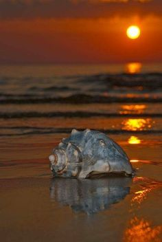 Sunset and a shell on the shores