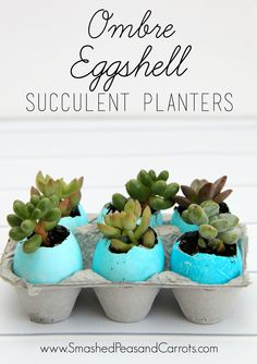 How to make your own Ombre Dyed Eggshell succulent planters using PAAS egg dying kits.