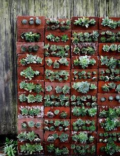 Recycled brick vertical garden? Yes!
