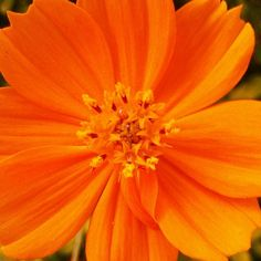 Orange flower ◘ prinx_x's photo on Instagram