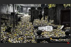 https://flic.kr/p/ALG2ub | Autumn at the Jewish cemetery in Ferrara | © All rights reserved. Use without permission is illegal.