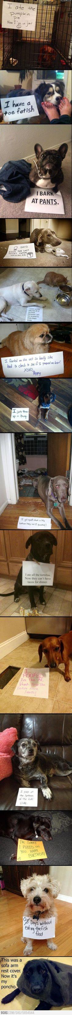 Best of dog shaming