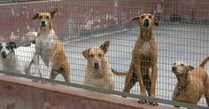 Por una ley que prohíba la compra-venta de animales en Buenos Aires FIRMA Y COMPARTE ESTA...