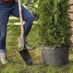 Shrubs See (and Buy!) the Garden Boots We've Been Loving - Freshen up your landscape this year with the latest gardening trends. Cool Plants, Shade Plants, Colorful Shrubs, Garden Boots, Easy Care Plants, Specimen Trees, Small White Flowers, Drought Tolerant Plants