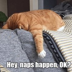 It was a Napsident - LOLcats is the best place to find and submit funny cat memes and other silly cat materials to share with the world. We find the funny cats that make you LOL so that you don't have to. Good Night Prayer, Good Night Quotes, Funny Cat Memes, Funny Cats, Like Animals, Funny Animals, Goeie Nag, Afrikaans Quotes, Cute Animal Photos