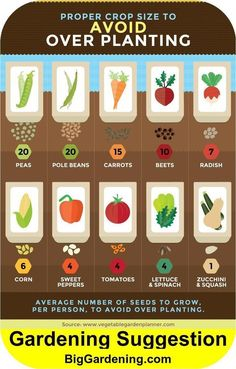 Just how much to plant per person. Just how much to Growing Vegetables, Growing Plants, Easiest Vegetables To Grow, Planting Vegetables, Veggies, Regrow Vegetables, When To Plant Vegetables, Vegetable Garden Design, Spring Vegetable Garden