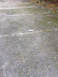 Found at Polish Club 18 Kedleston Rd, Derby on 06 Dec. 2015 by Beth: Found in the car park of the Polish Club. Lost & Found, Car Park, Spa Day, Pet Toys, Derby, Polish, Club, Vitreous Enamel, Nail Polish