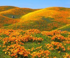 Beautiful Flower Field : Desktop and mobile wallpaper : Wallippo