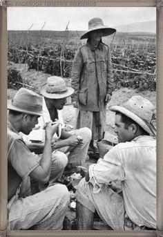 Guaza en los tomateros año 1960.... #fotoscanariasantigua #tenerifesenderos #fotosdelpasado #canariasantigua #canaryislands #islascanarias #blancoynegro #recuerdosdelpasado #fotosdelrecuerdo