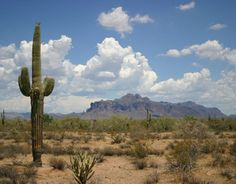 Saguaro Cactus New Mexico | The Sonoran Desert, part of the National Landscape Conservation System ...