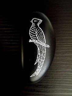 quetzal   Flickr - Photo Sharing!